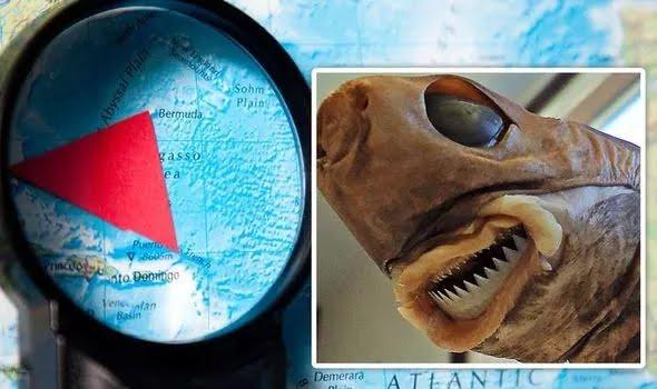 A bizarre creature was found in the Bermuda Triangle